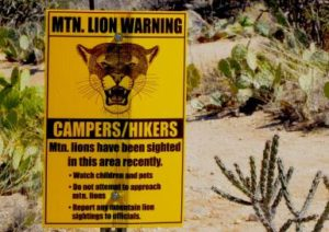 mountain-lion-warning-sign